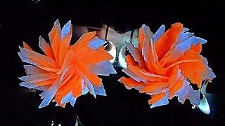 Цветы из моркови и редиса (дайкон). Flowers of carrot and radish.