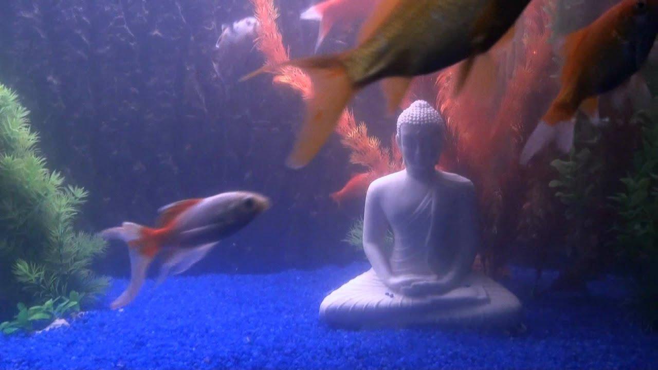 my 500l goldfish tank mein 500 liter goldfisch aquarium youtube. Black Bedroom Furniture Sets. Home Design Ideas