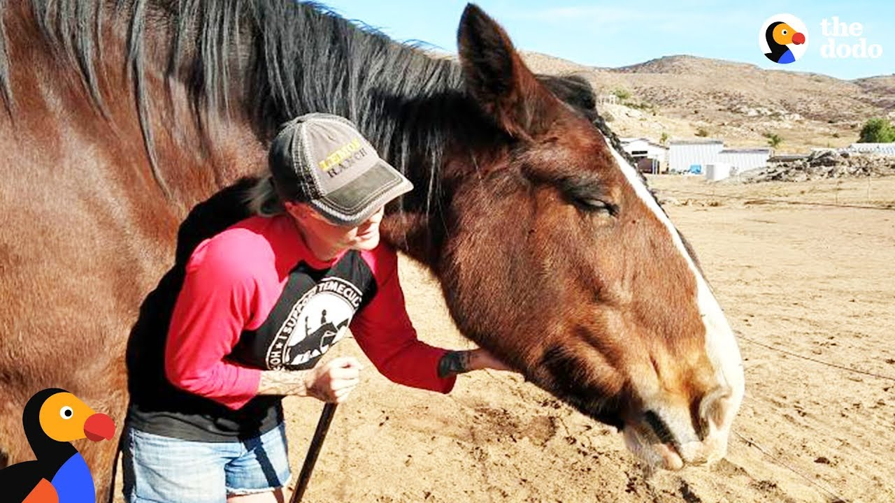 Horse Stops Woman From Taking Her Own Life | The Dodo