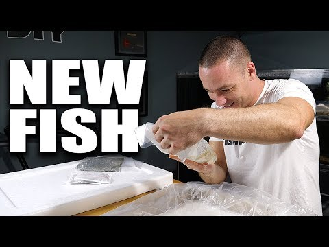 AQUARIUM FISH UNBOXING