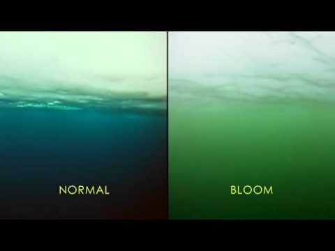Massive Phytoplankton Bloom Discovered