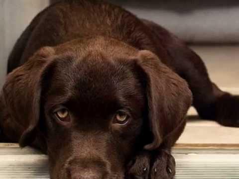 'Моей собаке' Вадим