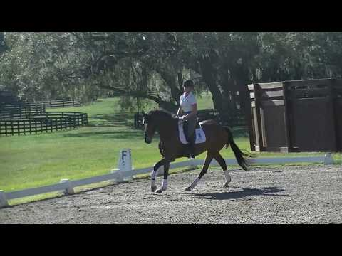 Training Dressage Test B  2018