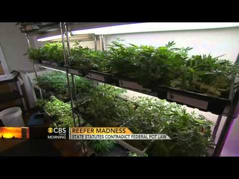 Marijuana: State Statutes Contradict Federal Law