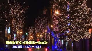 12/4〜1/31の期間、パセオ通りを中心にイルミネーションを点灯させてい...