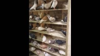 Ham at Pet Shop in Brooklyn NY