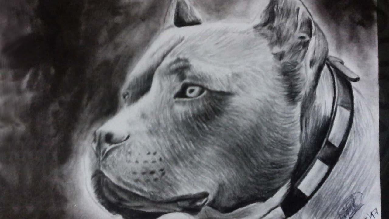 Dibujo De Un Pitbull A Lapiz Y Lapicero Drawing A Dog Hd