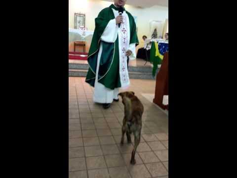 Durante una misa, un perro jugó con la sotana del cura y el video se hizo viral