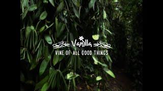 INDIAN VANILLA, VINE OF ALL GOOD THINGS - DECEMBER 2018