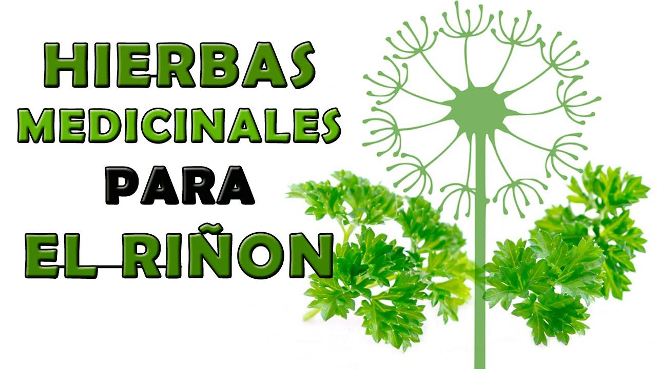 Hierbas medicinales para el ri on plantas medicinales for Hierbas y plantas medicinales
