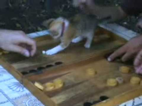 The little cat is playing Backgammon