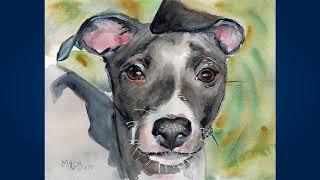 Левретка (Italian Greyhound)