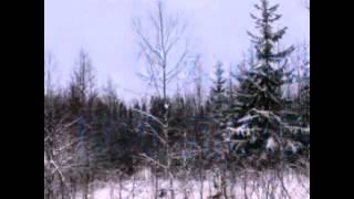 Тайга природа классный фильм о*ота на лося смотрим