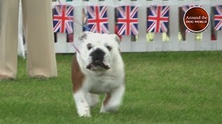 Around the Dog World - By royal appointment - Windsor 2016 Teaser