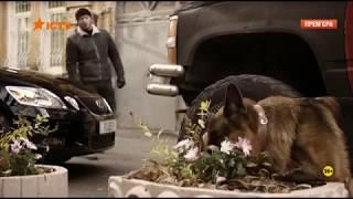 Пёс 31 серия 2017г