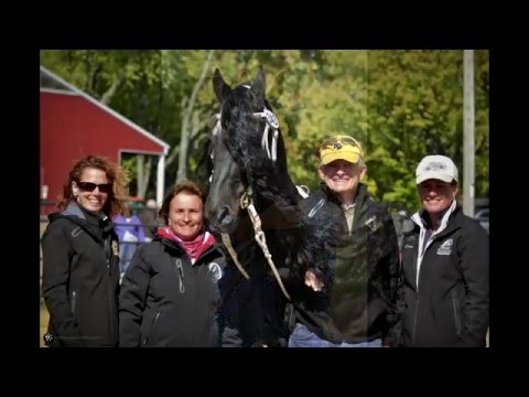 Anton 343 P Sport ~ KFPS Stallion show ceremony video 2016