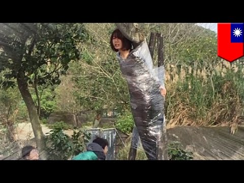 Mystery photo: Woman tied to tree at Taipei Zoo is a mystery, who is she and why? - TomoNews