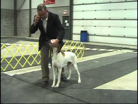 Dog Show Tips Episode 1