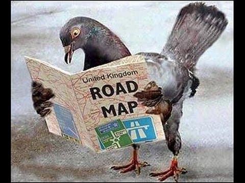 Poste Güvercinleri Yollarını Nasıl Bulur ? Şaşırıcaksınız !