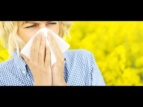 Best Air Purifier For Pollen | Allergy Season Air Purifier Review