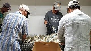 Người Việt làm nghề bắt cua tại làng chài Seadrift, Texas