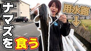 住宅街の用水路で釣ったナマズを食ってみた・・・ thumbnail