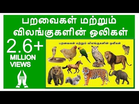 பறவைகள் மற்றும் விலங்குகளின் ஒலிகள்|Learn Birds and Animals Sound in Tamil