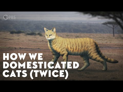 How Humans Domesticated Cats (Twice)
