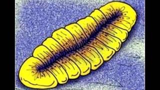 Развитие жизни на Земле (The Evolution of Life) - Виндермерия (Windermeria aitkeni)