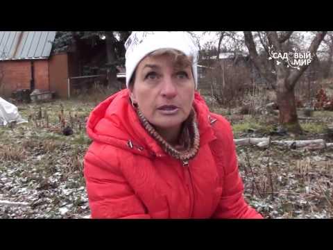 Как клубнику подготовить к зиме