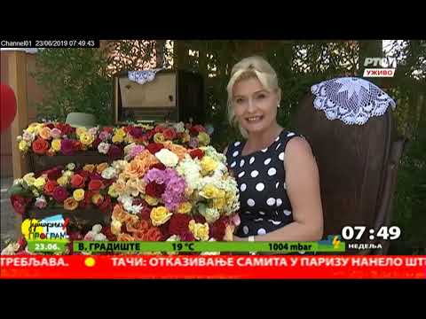Ruže Lipolista