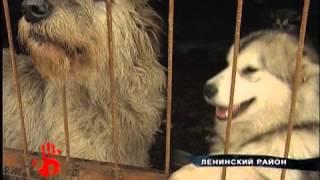 Породистых собак отравили крысиным ядом