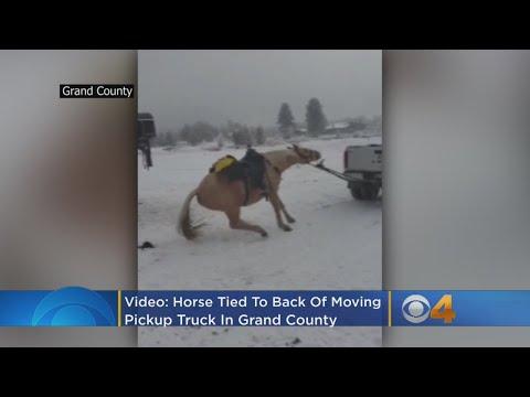 pferd vergewaltigt kassel