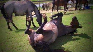Funny Horses 🐴🐴 Funny Horses Moments And Fails (Part 1) [Funny Pets]