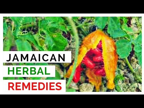 JAMAICAN HERBAL REMEDIES AND THEIR USES