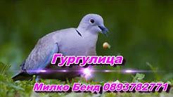 Гургулица 2018 Милко Бенд 0893782771