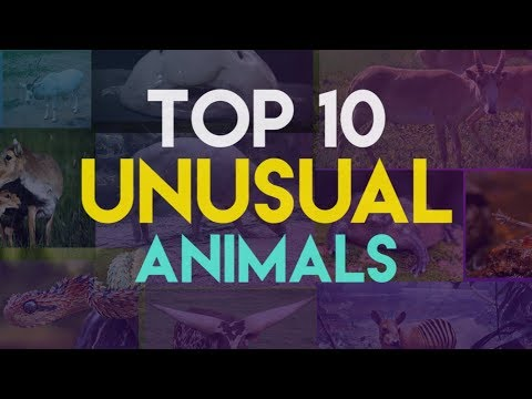 Top 10 Unusual Animals that Really Exist!