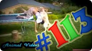 Приколы с животными №113   Изнасилование человека  Смешные животные  Animal videos(Приколы с животными №113. Изнасилование человека псом=D Не бойтесь, ничего криминального в этом видео нет)))..., 2015-05-15T17:03:04.000Z)