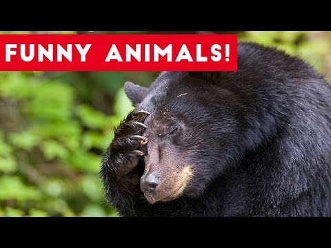 Thumbnail: Funniest Pets of the Week Compilation August 2017 | Funny Pet Videos
