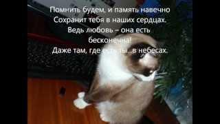 памяти кошки Ксюши