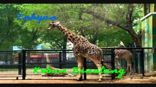 Gambar cover Takyun - kebon Binatang