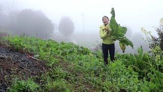 【南方小蓉】農村姑娘發現壹顆神秘的蔬菜长得像娃娃,在中國叫娃娃菜,煮來吃太好吃啦  A mysterious vegetable, like a child, tastes delicious