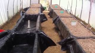 Sustainable farming setting up aquaponic gravel beds