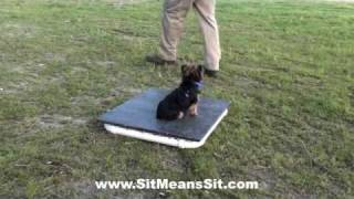 Blueberry The Yorkie - Atlanta Dog Training