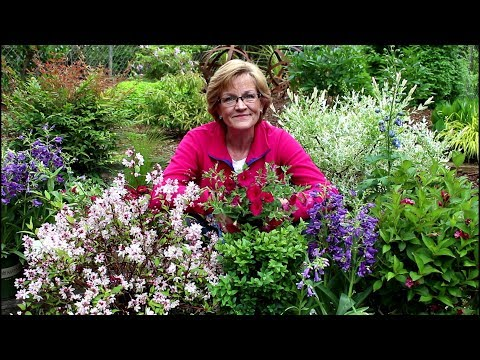 May Plant Haul!/Perennials, shrubs and annuals/Garden Style