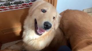 飼い主がトイレに入っているその時愛犬は・・・!?