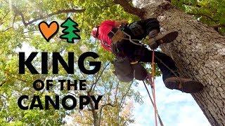 World's Greatest Tree Climbers Compete Head To Head