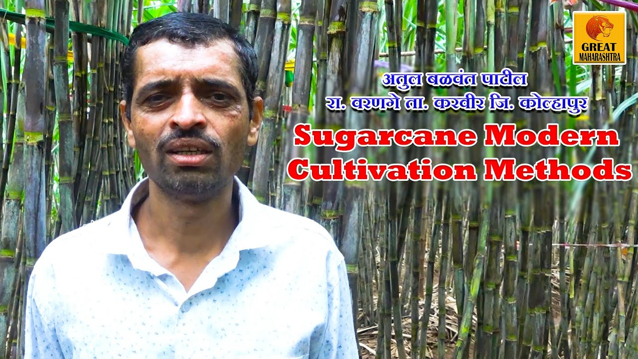 आधुनिक पद्धतीने ऊस लागवड केल्यामुळे एकरी 100 टन उत्पन्न | Sugarcane Modern Cultivation Methods 2020