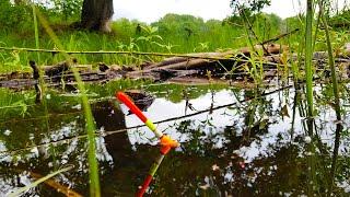 В этом Озере полно БРОНЗОВЫХ КАРАСЕЙ Рыбалка на поплавок ловля в 2021
