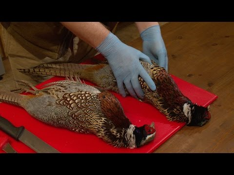 How to pluck a pheasant